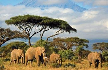 ทัวร์แอฟริกา เคปทาวน์ โจฮันเนสเบิร์ก ซันซิตี้ 8 วัน 5 คืน สายการบินเคนย่า แอร์เวย์